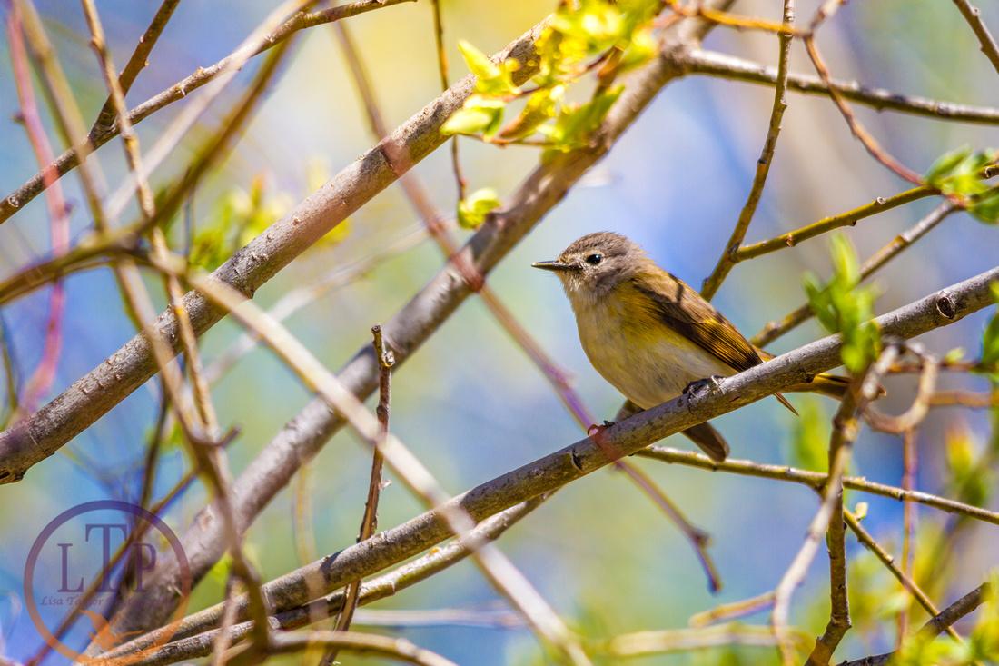 Spring Bird.jpg